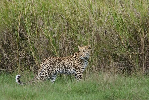 Africa-Kenya--014