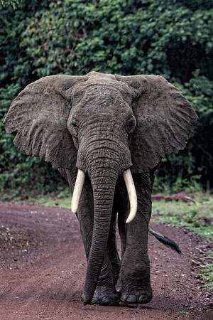 Africa-Kenya--022