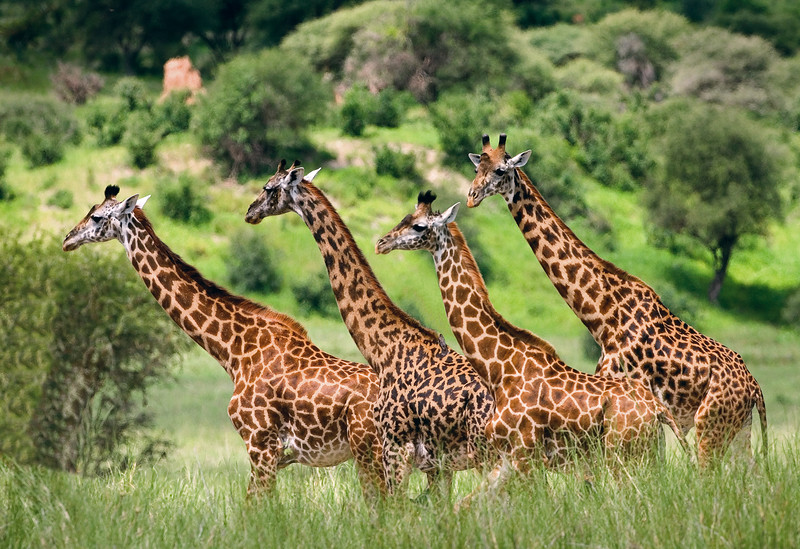 Africa-Kenya--008