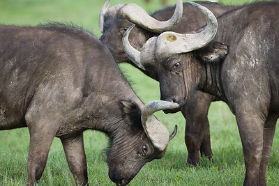 Africa-Kenya--016