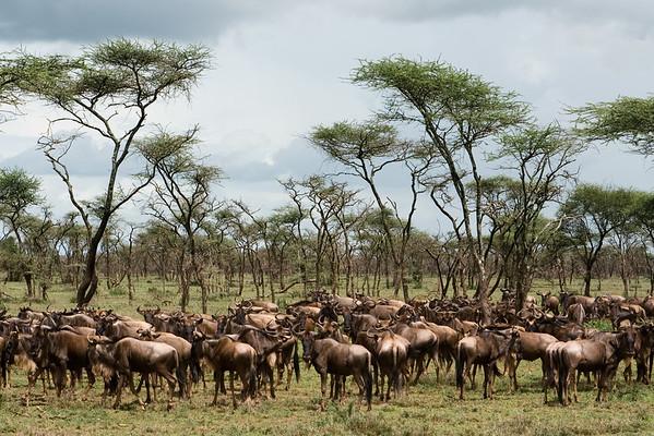 Africa-Kenya--018