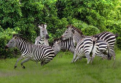 Africa-Kenya--007