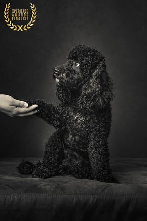 The Artful Dog Studio