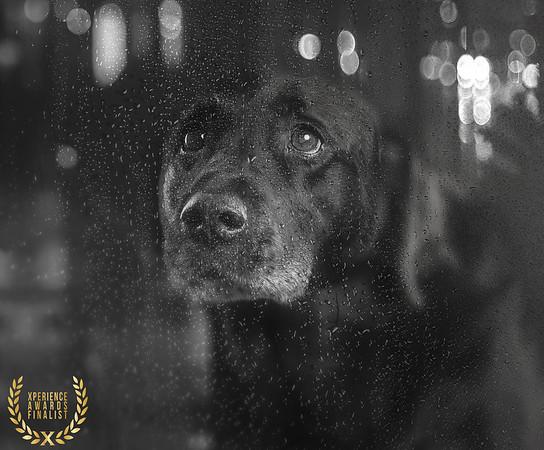 Sarah Middleton - Tom - Phil Hargreaves Photography Ltd