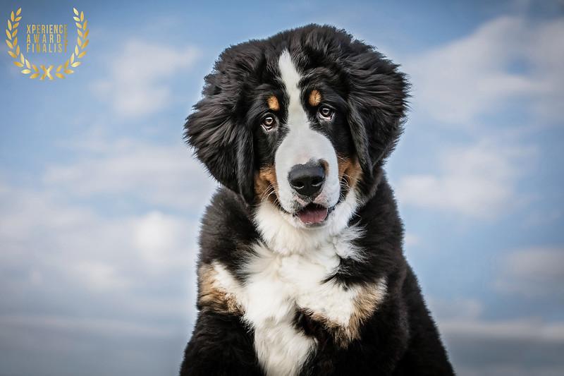 HOUND DOG IMAGES TOP DOG LOCATION IMAGE 4