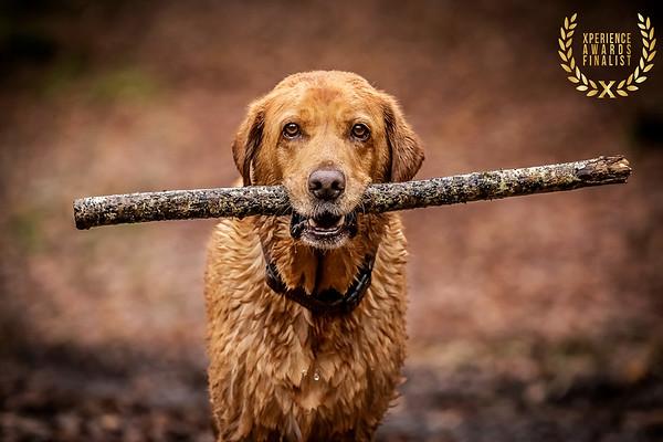 HOUND DOG IMAGES TOP DOG LOCATION IMAGE 7