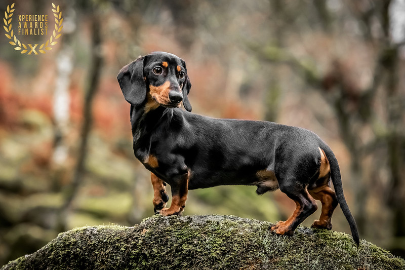HOUND DOG IMAGES TOP DOG LOCATION IMAGE 6