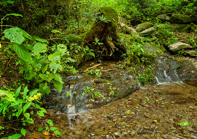Stream along the Trillium Gap Trail (#4), Great Smoky Mountains National Park, Tennessee