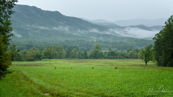 Misty day in Cades Cove, Great Smoky Mountains National Park, Tennessee
