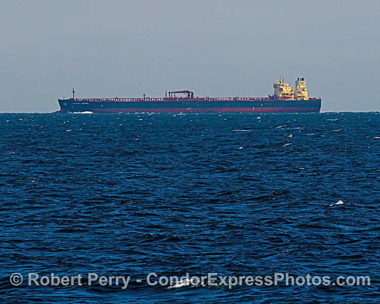 "Crude oil tanker ""Sonangol Cazenga"" in the northbound shipping lane."