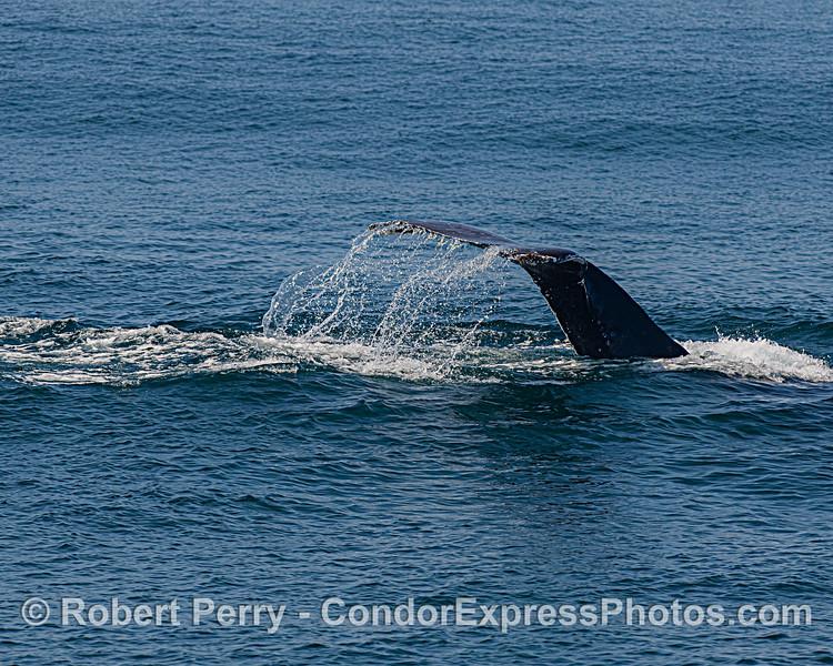 Humpback whale - waterfall
