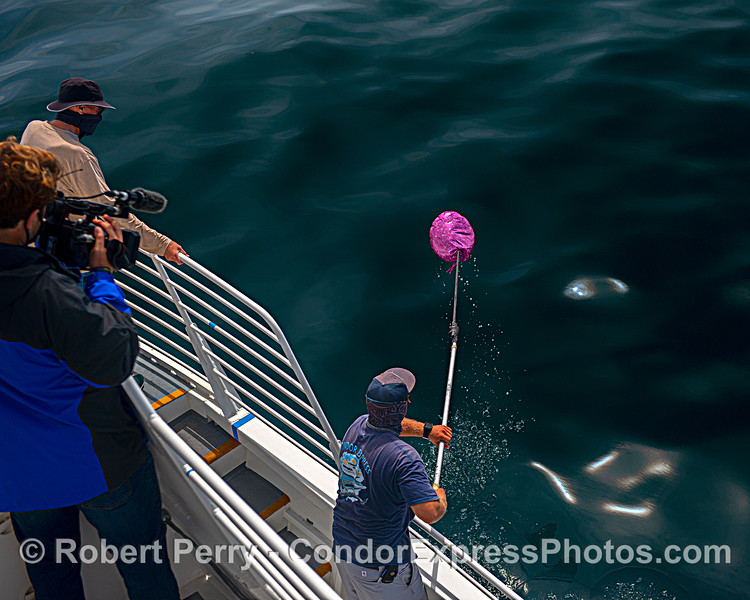Deckhand Colton retrieves Mylar balloon debris