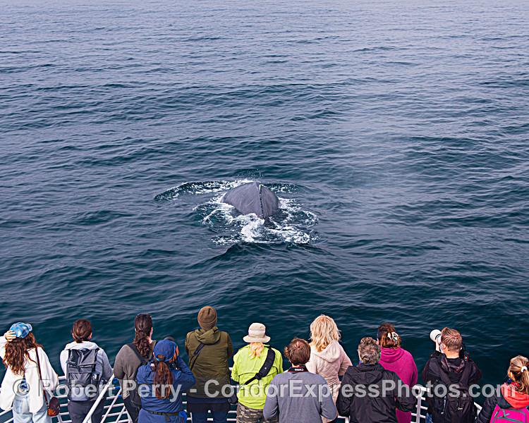 Whale fans enjoy the moment
