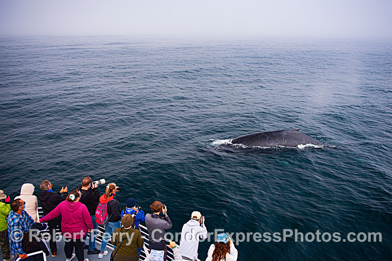 Humpback poses for some photos