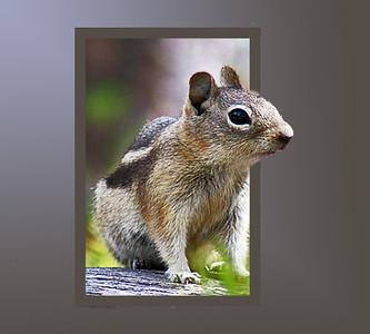 DAO14, DA,Squirrel