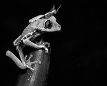 DA061,DB,Tree Frog 3