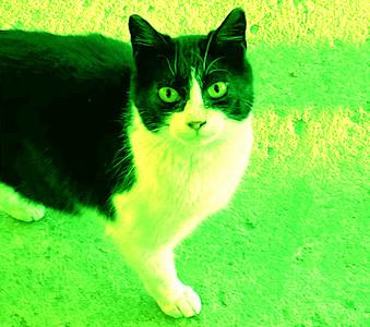 DA093,DA,Green Cat on a Cold Concrete Porch