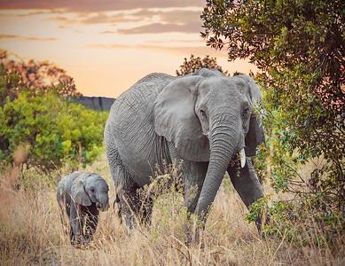 DA115,DN,Elephant-Sunrise
