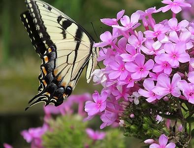DA104,DN,Butterfly Breakfast