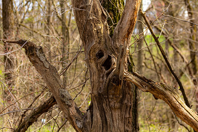 DA040,DN,Crazy_Eyed_Tree