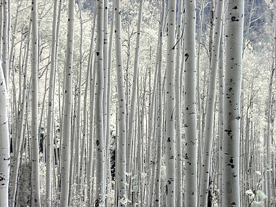DA040,DB,Aspens_Grove_Colorado