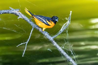 DA111,DN,Even birds are on the web