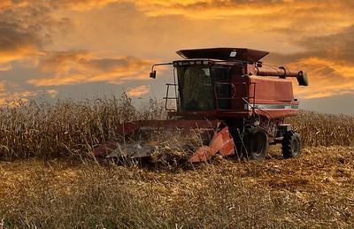 DA061,DP,Picking Corn At Sunset
