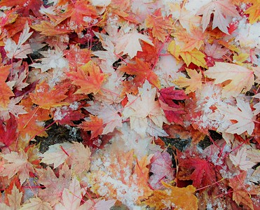 DA104,DA,Fallen Leaves Fallen Snow
