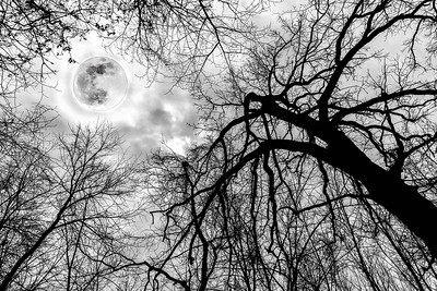 DA040,DA,Glistening_Moon_Against_Silhouette_of_Grasping_Tree_Limbs-