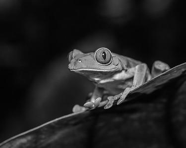 DA061,DB,Macro View of a Frog's eye