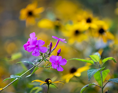 DA022,DN,September blooms fading fast