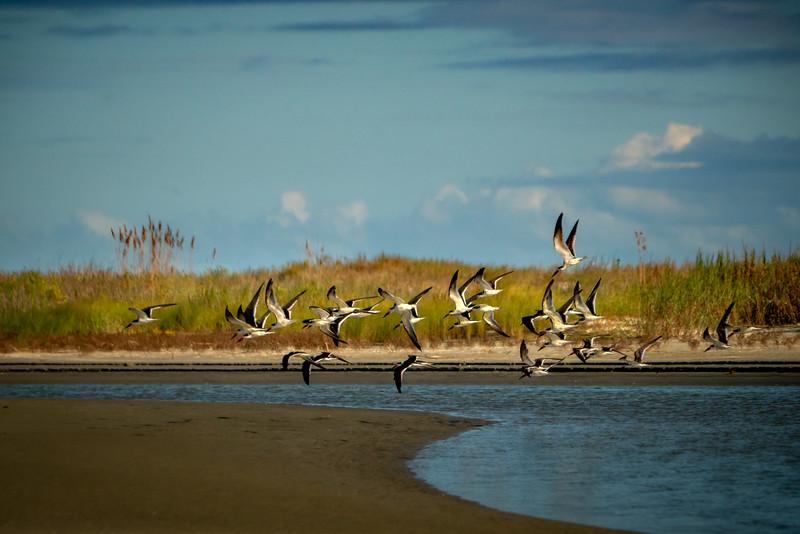 Birds at Ocean Course Beach