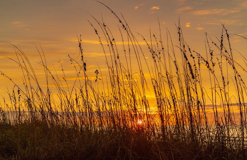 10-28-20 Sunrise Beachgrass