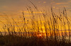 10-28-20 Sunrise Beachgrass