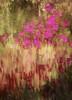 Magnolia Garden Reflection