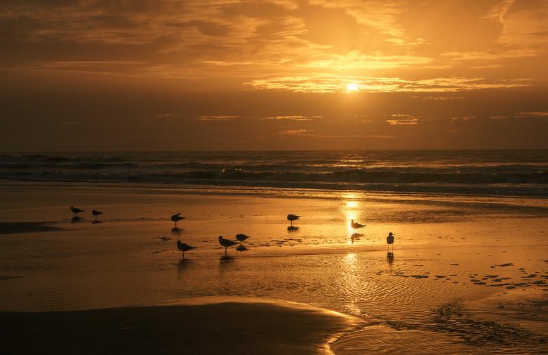 10-22-20 Sunrise Shorebirds