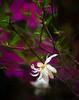 Single whit magnolia at Magnolia Plantation