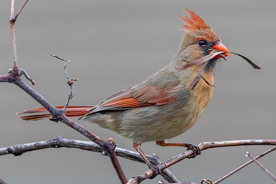 DA022,DP,Harvesting for the nest
