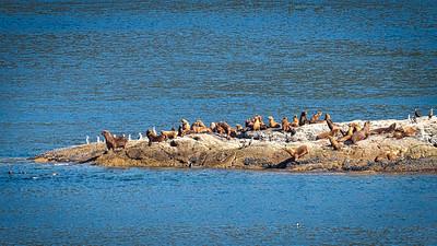 Birds & Sea Lions