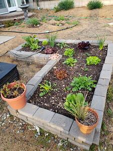 Starting a Victory Garden