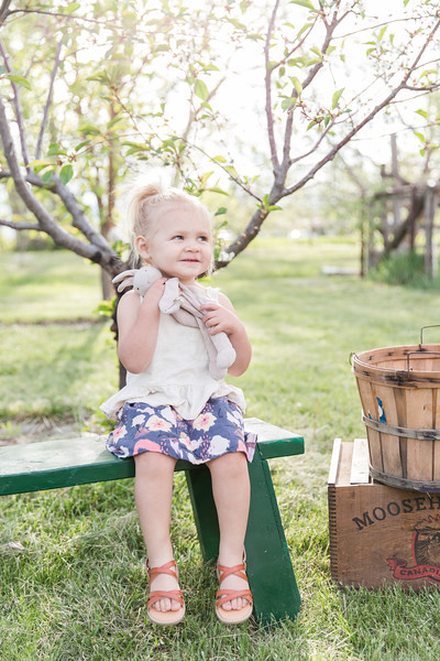 Apple Orchard-5