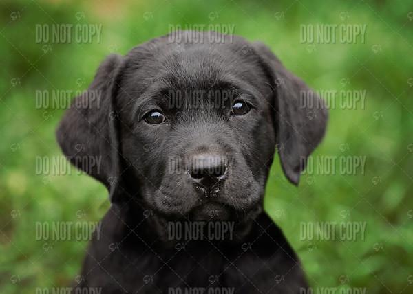 puppy01a