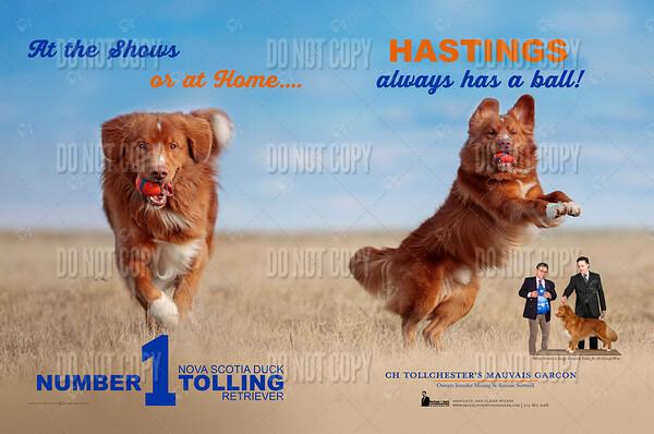 Hastings (July)3