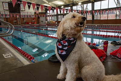 dog, pool, swimming, puppy, swim, athletics, photo by Kim Kreuzman