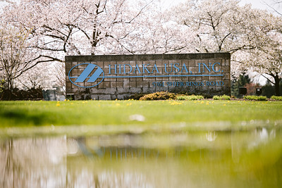 Hidaka USA 2020 Cherry Blossoms - Dublin Ohio
