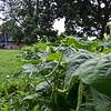 MET 072320 TAF Crops