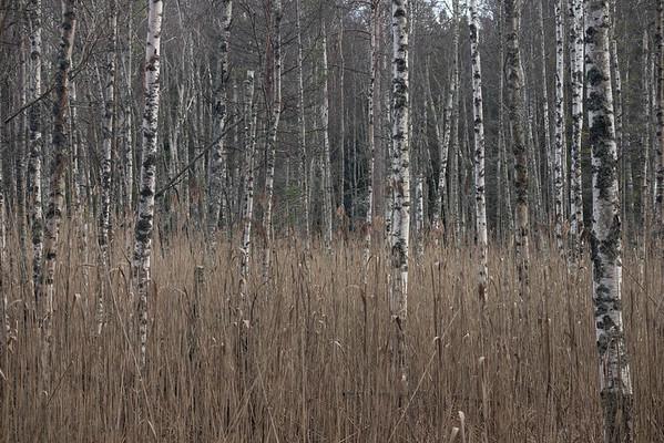 spillersboda_2020-03-10_153138