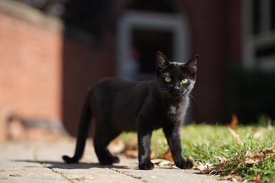 National Kitten Day