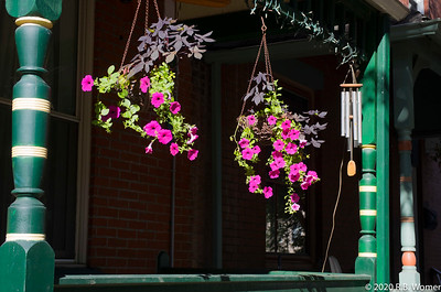 Potted Porch Petunias