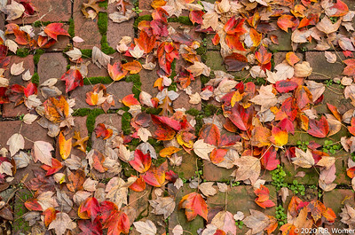 Leaves on the Patio
